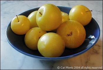 yellowplums.sm2