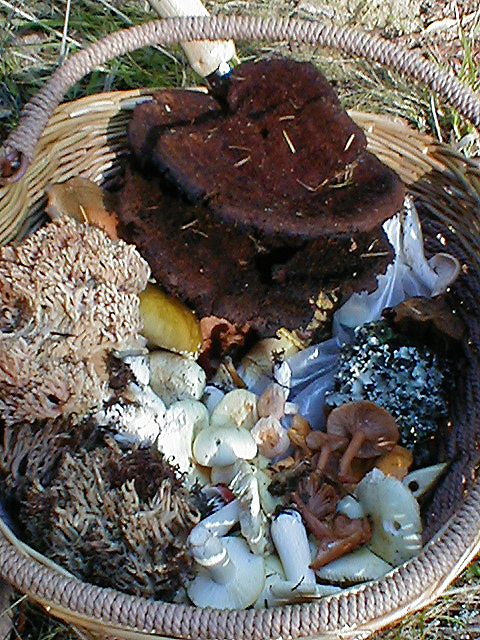 Big Basket of Mushrooms