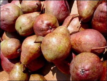 Pears2_2
